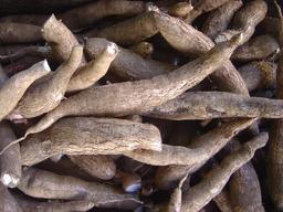 Racines de manioc. Source : http://data.abuledu.org/URI/52d99b1f-racines-de-manioc