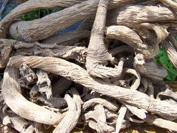 Racines sèches de grande gentiane. Source : http://data.abuledu.org/URI/565cff28-racines-seches-de-grande-gentiane