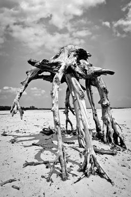 Racines terrifiantes - 3. Source : http://data.abuledu.org/URI/53ac60b9-racines-terrifiantes-3