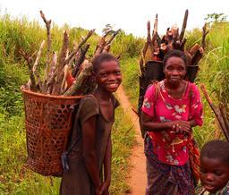 Ramassage familial de bois à Basankusu. Source : http://data.abuledu.org/URI/52740b53-ramassage-familial-de-bois-a-basankusu