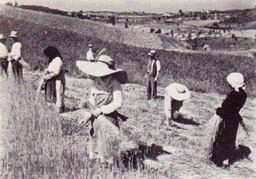 Récolte de la paille en Toscane. Source : http://data.abuledu.org/URI/51fa86f7-recolte-de-la-paille-en-toscane