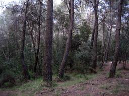Régénération forestière méditerranéenne. Source : http://data.abuledu.org/URI/582eaf56-regeneration-forestiere-mediterraneenne