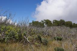 Régénération forestière naturelle après un incendie. Source : http://data.abuledu.org/URI/582e9ced-regeneration-forestiere-naturelle-apres-un-incendie