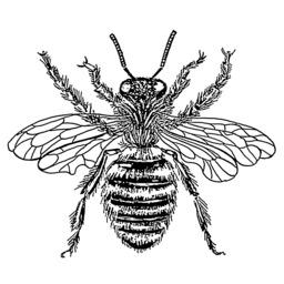 Reine des abeilles. Source : http://data.abuledu.org/URI/53b9a00f-reine-des-abeilles