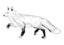 Renard. Source : http://data.abuledu.org/URI/50278a30-renard