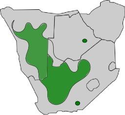 Répartition du Philetairus socius en Afrique du Sud. Source : http://data.abuledu.org/URI/52d1b9f7-repartition-du-philetairus-socius-en-afrique-du-sud