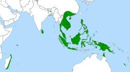 Répartition géographique des Népenthes. Source : http://data.abuledu.org/URI/52093e2c-repartition-geographique-des-nepenthes