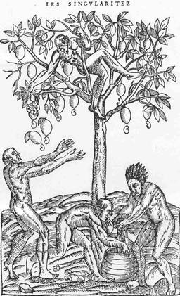 Représentation ancienne de cueilleurs de pommes de cajou. Source : http://data.abuledu.org/URI/520a0e65-representation-ancienne-de-cueilleurs-de-pommes-de-cajou