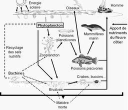 Réseau trophique en eaux côtières. Source : http://data.abuledu.org/URI/50f9d814-reseau-trophique-en-eaux-cotieres