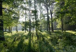 Réserve naturelle à Dülmen. Source : http://data.abuledu.org/URI/568640f8-reserve-naturelle-a-dulmen
