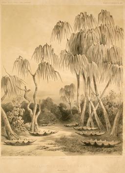 Réservoirs d'eau dans une des îles du détroit de Torrès. Source : http://data.abuledu.org/URI/5981b5e5-reservoirs-d-eau-dans-une-des-iles-du-detroit-de-torres