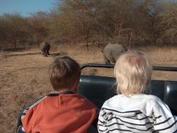 Rhinocéros dans la Réserve de Bandia. Source : http://data.abuledu.org/URI/5486b0b3-rhinoceros-dans-la-reserve-de-bandia