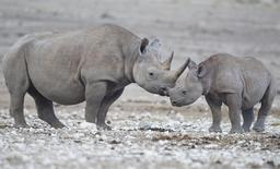 Rhinocéros femelle et son petit en Namibie. Source : http://data.abuledu.org/URI/55064638-rhinoceros-femelle-et-son-petit-en-namibie