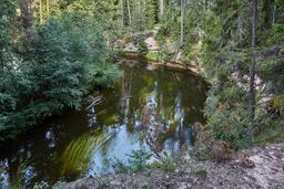 Rivière Ahja en Estonie en été. Source : http://data.abuledu.org/URI/5504b3d5-riviere-ahja-en-estonie-en-ete