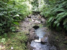 Rivière Carbet en Guadeloupe. Source : http://data.abuledu.org/URI/5276a6ae-riviere-carbet-en-guadeloupe
