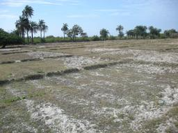 Rizière de Carabane à Casamance. Source : http://data.abuledu.org/URI/52e4ee92-riziere-de-carabane-a-casamance
