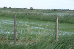 Rizière près de l'étang de Vaccarès. Source : http://data.abuledu.org/URI/56d5dd12-riziere-pres-de-l-etang-de-vaccares