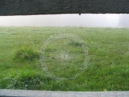 Rosée sur toile d'araignée. Source : http://data.abuledu.org/URI/519dcc71-rosee-sur-toile-d-araignee