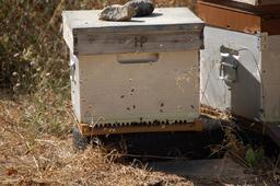 Ruche artificielle. Source : http://data.abuledu.org/URI/47f50c09-ruche-artificielle