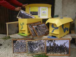 Ruches pédagogiques. Source : http://data.abuledu.org/URI/51e07cfd-ruches-pedagogiques