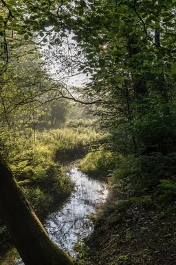 Ruisseau dans la réserve naturelle de Dülmen. Source : http://data.abuledu.org/URI/56864303-ruisseau-dans-la-reserve-naturelle-de-dulmen