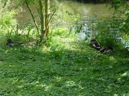 Ruisseau de l'Eau Bourde au parc du Moulineau. Source : http://data.abuledu.org/URI/5826454c-ruisseau-de-l-eau-bourde-au-parc-du-moulineau
