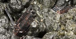 Rutile sur chlorite. Source : http://data.abuledu.org/URI/520cf6cc-rutile-sur-chlorite-