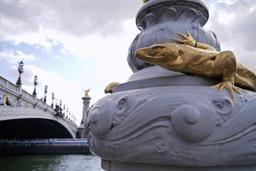 Salamandre du Pont Alexandre III à Paris. Source : http://data.abuledu.org/URI/535cd775-salamandre-du-pont-alexandre-iii-a-paris