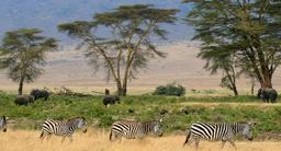 Savane du Serengeti en Tanzanie. Source : http://data.abuledu.org/URI/527786e9-savane-du-serengeti-en-tanzanie
