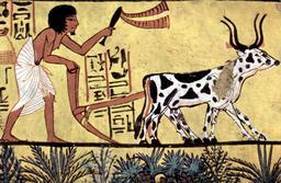 Scène de labour en Égypte. Source : http://data.abuledu.org/URI/5075beab-scene-de-labour-en-egypte