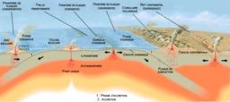 Schéma des plaques tectoniques. Source : http://data.abuledu.org/URI/503d3b67-schema-des-plaques-tectoniques
