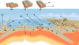 Schéma du fonctionnement des dorsales. Source : http://data.abuledu.org/URI/509ebc23-schema-du-fonctionnement-des-dorsales