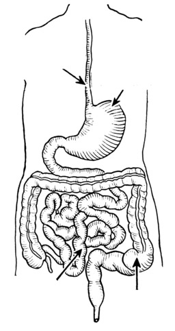 Schéma non légendé de l'appareil digestif. Source : http://data.abuledu.org/URI/53ec8f1f-schema-non-legende-de-l-appareil-digestif