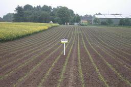 Semis de maïs. Source : http://data.abuledu.org/URI/5288c9e5-semis-de-mais