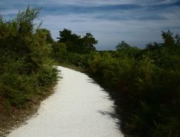 Sentier dans les prés salés de La Teste-de-Buch. Source : http://data.abuledu.org/URI/55bb8ff9-sentier-dans-les-pres-sales-de-la-teste-de-buch
