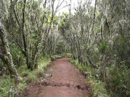 Sentier forestier de Marangu pour le Kilimandjaro. Source : http://data.abuledu.org/URI/52d6d6d4-sentier-forestier-de-marangu-pour-le-kilimandjaro