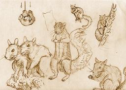Sept croquis d'écureuils. Source : http://data.abuledu.org/URI/533fd0d5-sept-croquis-d-ecureuils