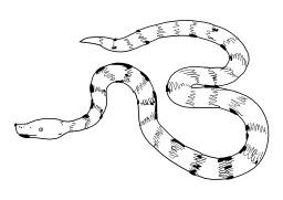 Serpent. Source : http://data.abuledu.org/URI/5027ad9d-serpent