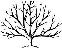 Silhouette d'arbre bouturé. Source : http://data.abuledu.org/URI/54077cec-silhouette-d-arbre-bouture