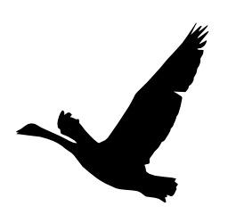 Silhouette d'oie en vol. Source : http://data.abuledu.org/URI/529b4f9e-silhouette-d-oie-en-vol