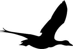 Silhouette de canard en vol. Source : http://data.abuledu.org/URI/5480b59e-silhouette-de-canard-en-vol