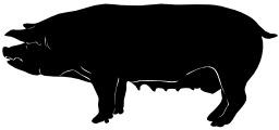 Silhouette de cochon. Source : http://data.abuledu.org/URI/5049c6ab-silhouette-de-cochon