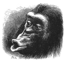Singe boudeur. Source : http://data.abuledu.org/URI/532cc33b-singe-boudeur