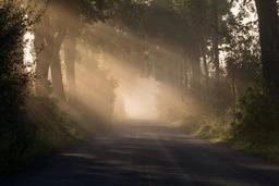 Soleil du matin en automne. Source : http://data.abuledu.org/URI/5461e351-soleil-du-matin-en-automne