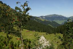 Sorbier dans les Alpes. Source : http://data.abuledu.org/URI/504e4f59-sorbier-dans-les-alpes