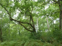 Sous-bois au parc du Bourgailh. Source : http://data.abuledu.org/URI/5826cea0-sous-bois-au-parc-du-bourgailh