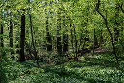 Sous-bois autrichien au printemps. Source : http://data.abuledu.org/URI/5652bd45-sous-bois-autrichien-au-printemps