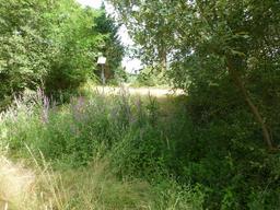 Sous-bois dans le parc du Bourgailh. Source : http://data.abuledu.org/URI/5826cd0f-sous-bois-dans-le-parc-du-bourgailh