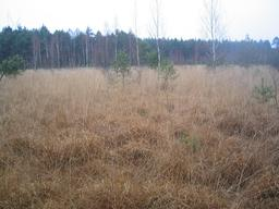 Sous-bois de molinie. Source : http://data.abuledu.org/URI/594a84fc-sous-bois-de-molinie