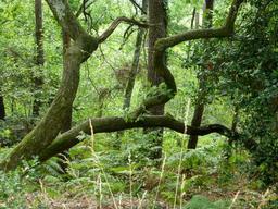 Sous-bois de pinède dans le parc du Bourgailh. Source : http://data.abuledu.org/URI/5826ca99-sous-bois-de-pinede-dans-le-parc-du-bourgailh